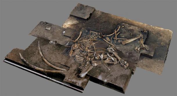 3D - image from over 500 individual photos of the straight-tusked elephant skeleton. (Image: Ivo Verheijen, Schöningen Research Station / Tubingen University)