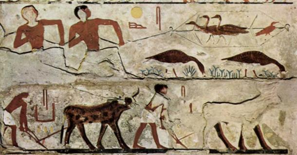 4th Dynasty of Egypt painting: Trapping (harvesting) birds; Plowing fields.