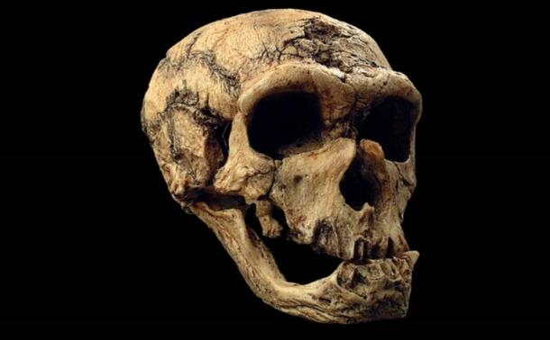 50,000-year-old Skull May Show Human-Neanderthal Hybrids Originated in Levant, not Europe