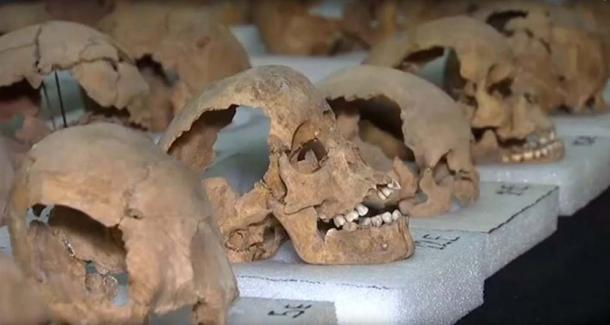 A selection of the 676 skulls that have been found so far