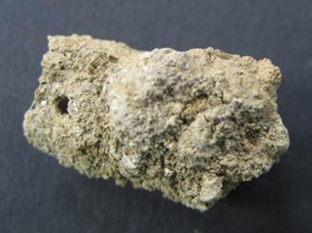 8000-year-old human coprolite from Çatalhöyük, Turkey