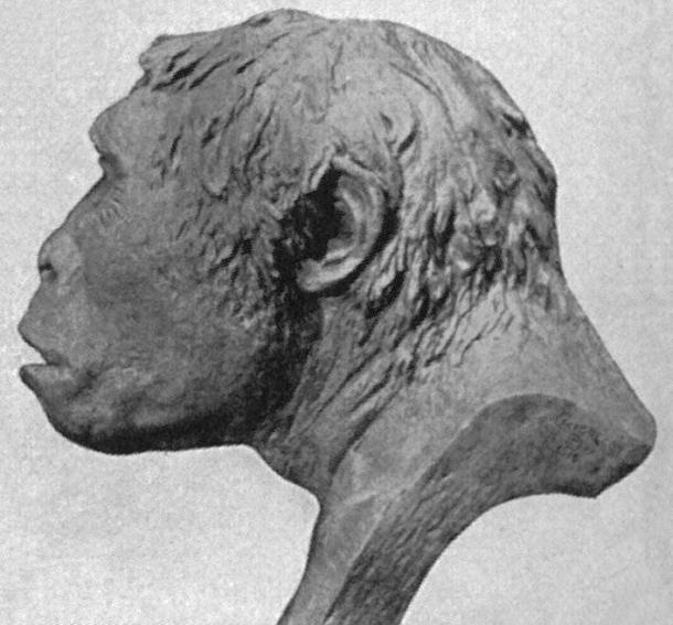 A 1922 reconstruction of the skull of Java Man based on the Trinil 2 find. (Public Domain)