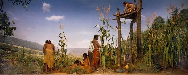 A Native American garden with squash, beans, and corn. (Public Domain)