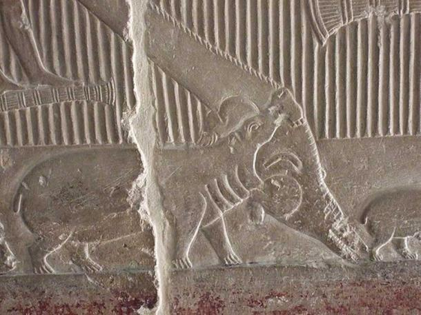 A carved relief of a hippopotamus attacking a crocodile from the tomb of Vizier Mereruka in Saqqara, Egypt. Mereruka served as Vizier during king Teti's reign in the beginning of the 6th dynasty of Egypt. (Flop Eared Mule/CC BY 2.0)