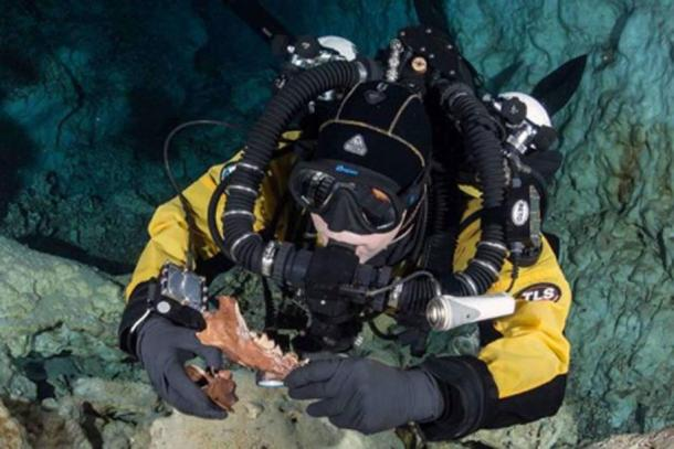 A diver in the Hoyo Negro pit, holding a Protocyon jaw and vertebrae. (Roberto Chavez-Arce)