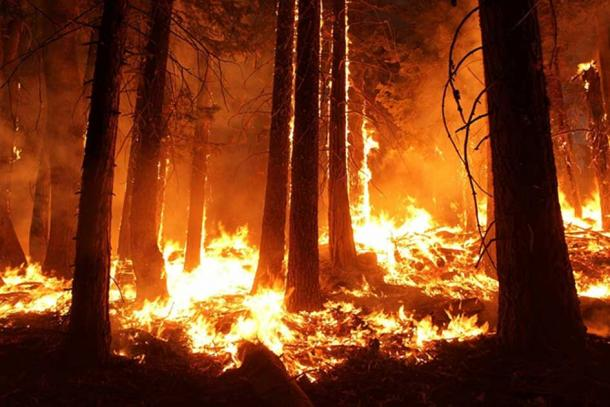 A forest fire. (Pixabay License)