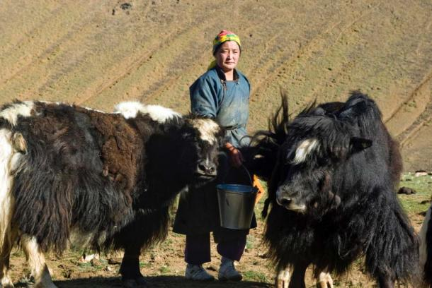 A herder woman milks her yaks in Must, Khovd Province, Mongolia. (United Nations Photo/CC BY NC ND 2.0)