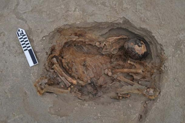 A light-brown camelid laying on top of a human body. (© 2019 Gabriel Prieto et al / Plos ONE )