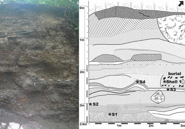 A profile shot of the Angi burial. Left - photo taken during the excavation. Right - drawing of photo, showing the different layers, as well as where the shells and body were buried. (Roksandic M / Antiquity)