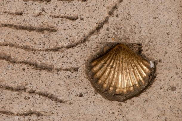 A scallop shell, the symbol of St James, points the way for travelers on the Camino de Santiago.