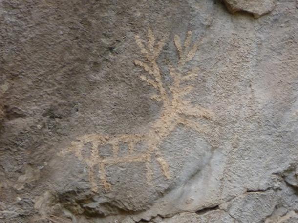 A stag at Lipci, Montenegro.
