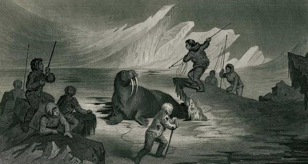 A walrus hunt in Greenland.