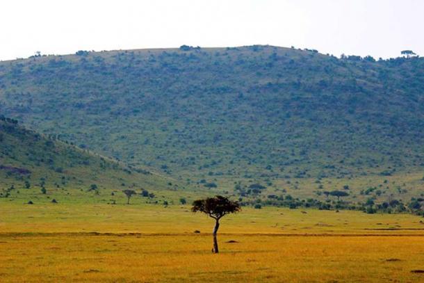 Acacia tree in Kenya savannah.