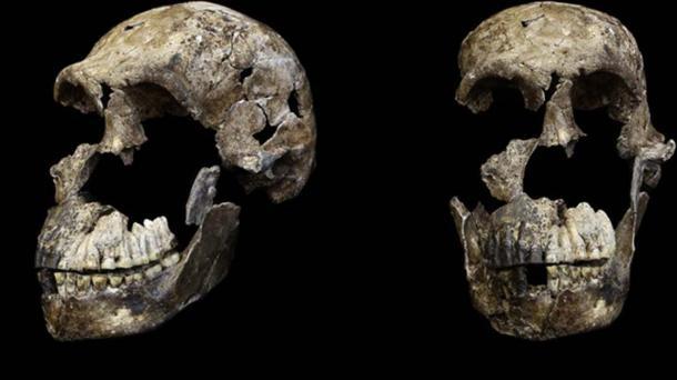 Adult male cranium 'H. naledi' from Lesedi chamber, Naledi, South Africa