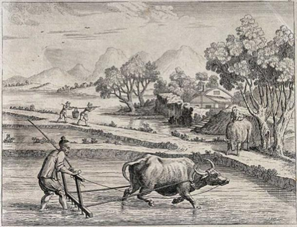 Agriculture: raking rice paddies in China with an ox-drawn plow. Engraving by J. June after Augustin Heckel. (Wellcome Images/CC BY 4.0)