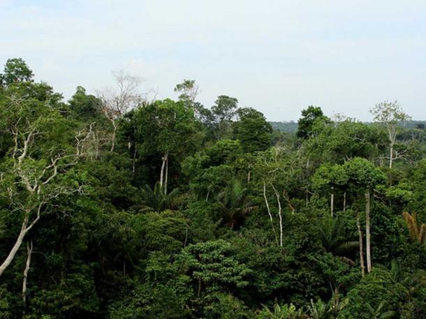 Amazon Rainforest, Brazil.