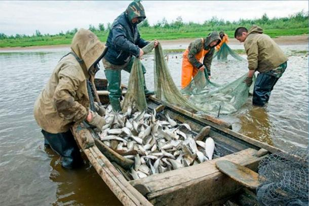 Amur River indigenous people are netting salmon in modern days. (Image: AiF / The Siberian Times)