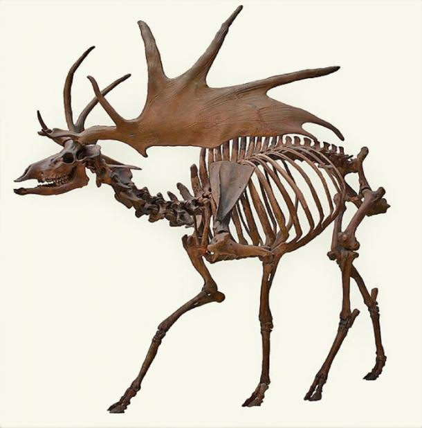 An Irish Elk skeleton (CC by SA 2.5)