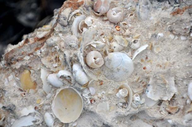 An example of mollusk-rich fossiliferous limestone (St John, J / CC BY 2.0)