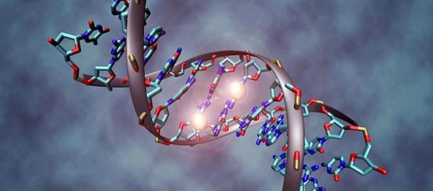 Ancestors Had More DNA Than We Do Now: Have we Devolved?