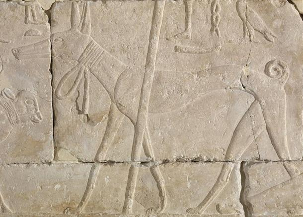 Ancient Egyptian relief carving of a dog.