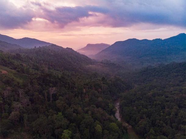 Ancient Rain Forest in Sri Lanka   Source: zorgans / Adobe Stock