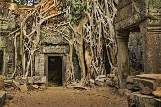 Angkor Wat lost in the jungle. (David Davis / Adobe Stock)