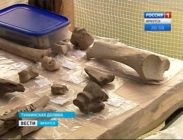 Animal bones found at the site. Image: Vesti.Irkutsk