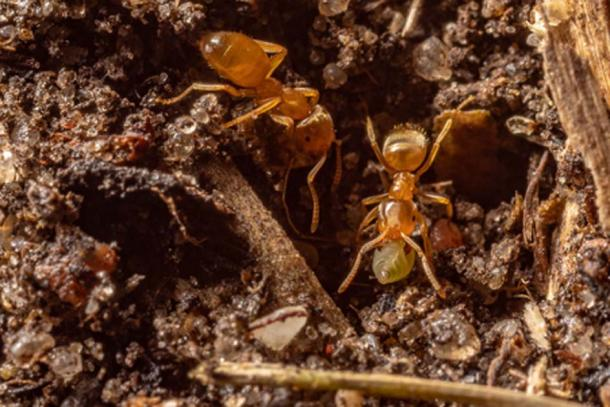 Ants are known for being very cooperative and creating complex societies capable of war, agriculture, and constructing immense structures that make up their nests. (CC0)