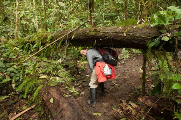 April Holloway in the Amazon jungle. It is so dense that finding specific plants can be difficult. Planting medicinal forests will make the remedies much more accessible. Credit: Ioannis Syrigos