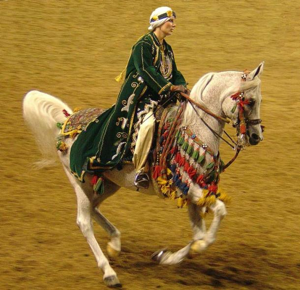 "An Arabian horse in ""native"" costume, used in both exhibition and competition"