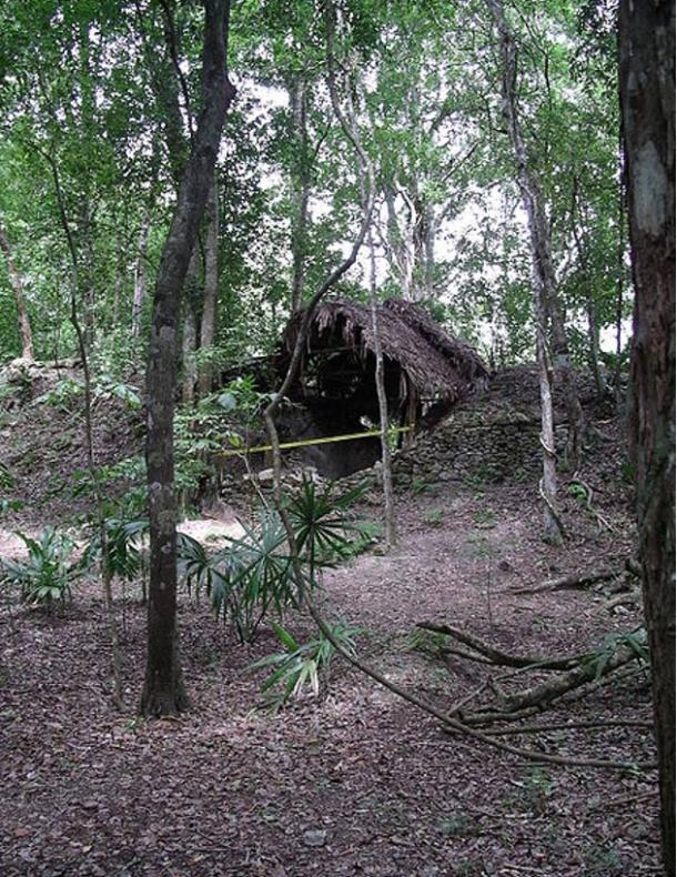 An example of Archaeology Under the Canopy in Plaza Axcanan at El Pilar. Notice the partial exposure of the outer wall of the monument, while the inner walls are protected by the thatched roof. The rest of the monument is protected by plant foliage and soil so it will be preserved for future generations.