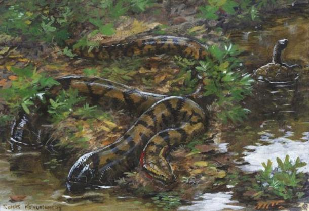 Artistic representation of Titanoboa. Source: tuomaskoivurinne/Deviant Art