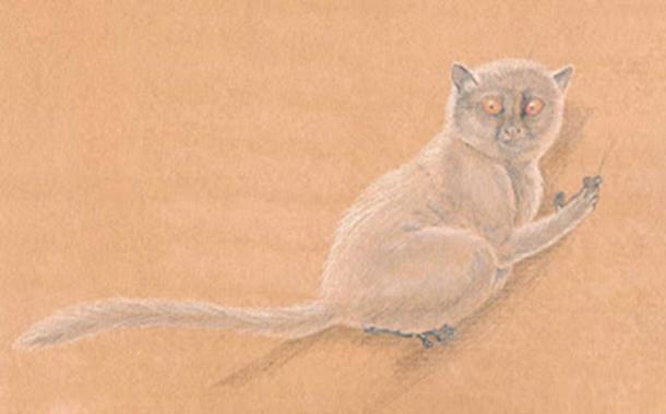 Artists impression of a close relative (donrussellia lusitanica) of the owner of the ankle bone