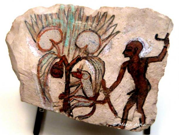 As can be seen in this ostracon from Deir el-Medina, baboons and monkeys were trained to pick fruits and dates. But not all scholars agree with this assessment. Ramesside Period. Musée du Louvre Paris. Exhibition 'Animals and Pharaohs', CaixaForum Barcelona.