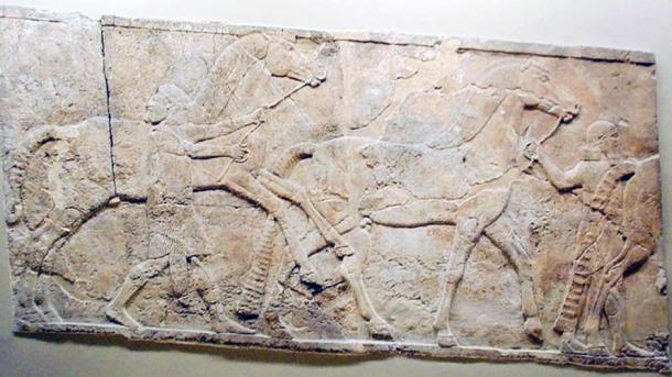 Assyrian wall carving of horses and grooms. From Nineveh, South West Palace, 790BC - 592BC.