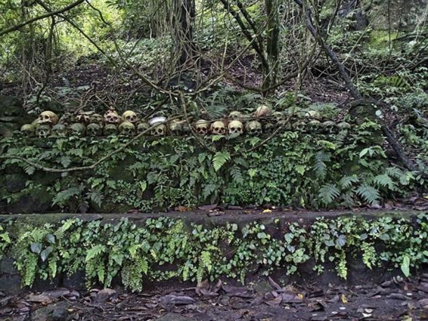 At the cemetery on Skull Island there is a Taru Menyan tree that emits a fragrant smell, so the cemetery does not stink. (Ayrahsha / CC BY-SA 4.0)