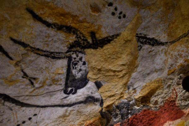 Auroch's head in the Hall of Bulls at Lascaux Cave. (bobdu11 / Adobe Stock)
