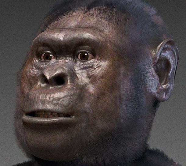 Australopithecus afarensis - forensic facial reconstruction.