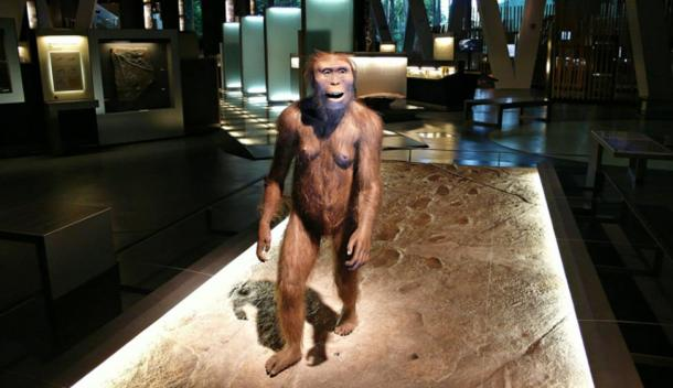A model of an Australopithecus female