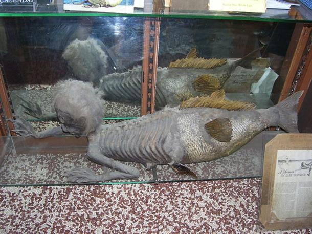 The Banff Merman, similar to a Fiji mermaid, on display at the Indian Trading Post.