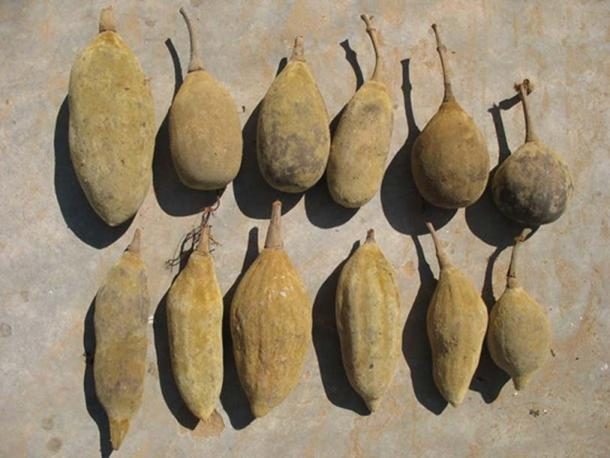 Baobab fruit: Author provided