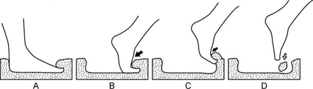 Based on foot printing tests they conducted, scientists think the print comes from a straight down step. The diagram shows the different type of prints that could be made with different angles and pressure. (Universidad Austral de Chile)