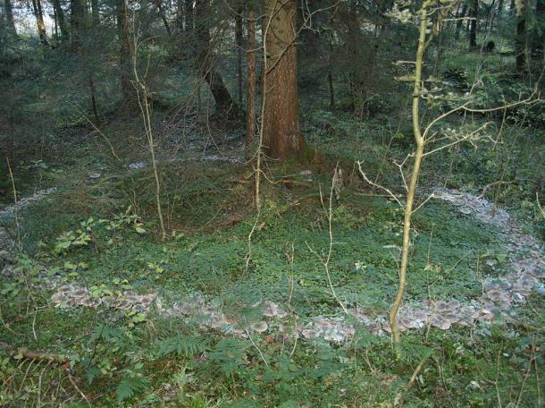 Do you dare enter a fairy ring? The mythical mushroom