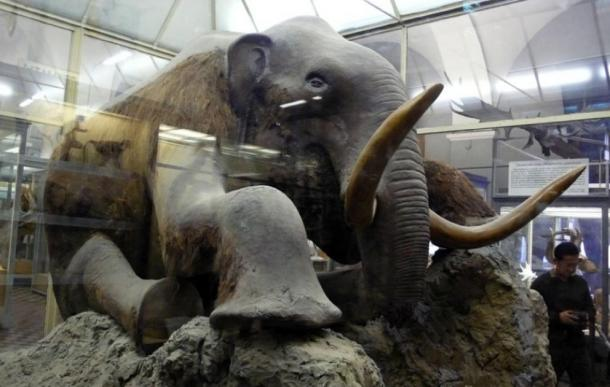 The Beresovka mammoth, except for head, it is an almost wholly preserved, mummified mammoth carcass discovered in Siberia. (Cropbot / CC BY-SA 2.0)