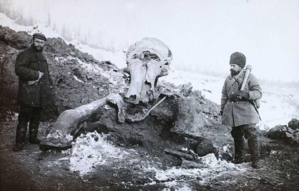 Berezovka Mammoth. (FORTEPAN / Magyar Földrajzi Múzeum / Diagyűjtemény/CC BY SA 3.0)