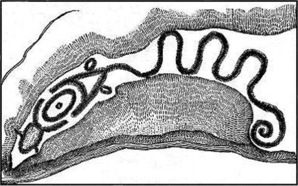 Big Serpent Mound, Ohio, McClen 1885 sketch. Credit: Indigenous Peoples Research Foundation.