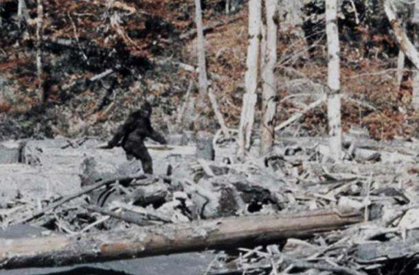 Bigfoot in the Patterson-Gimlin Film.