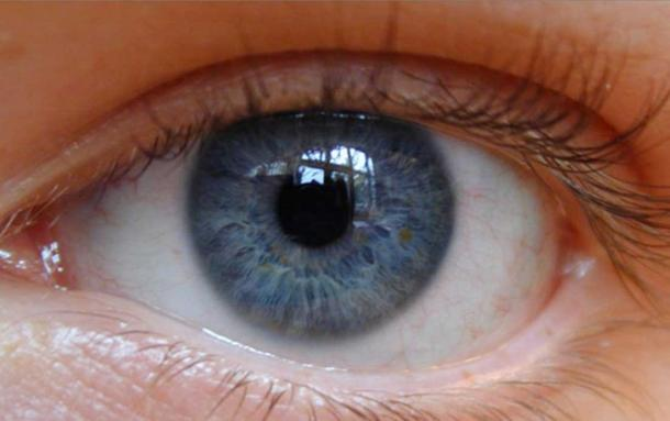 Blue eyes arose as a genetic mutation about 10,000 years ago.