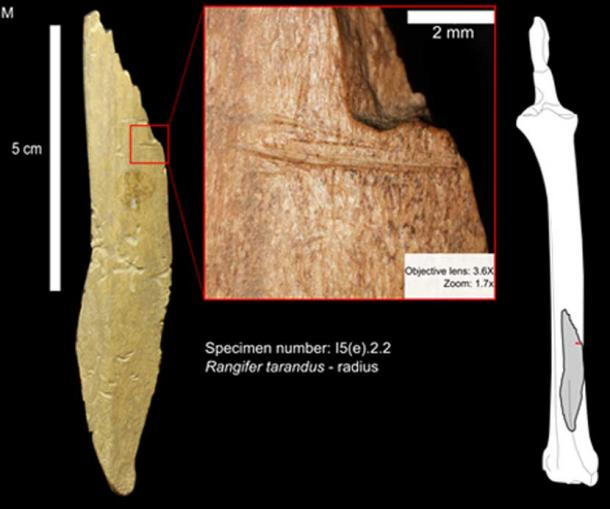 Bone sample from Bluefish cave showing cut marks made by humans.